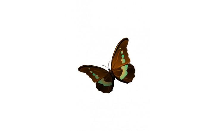Butterfly Vectors   Vector Pack   Vector Elements   VectorVice