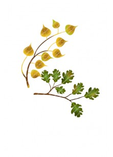 autumn-tree-branches-vector-image