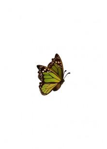 Butterfly Vectors | Vector Pack | Vector Elements | VectorVice