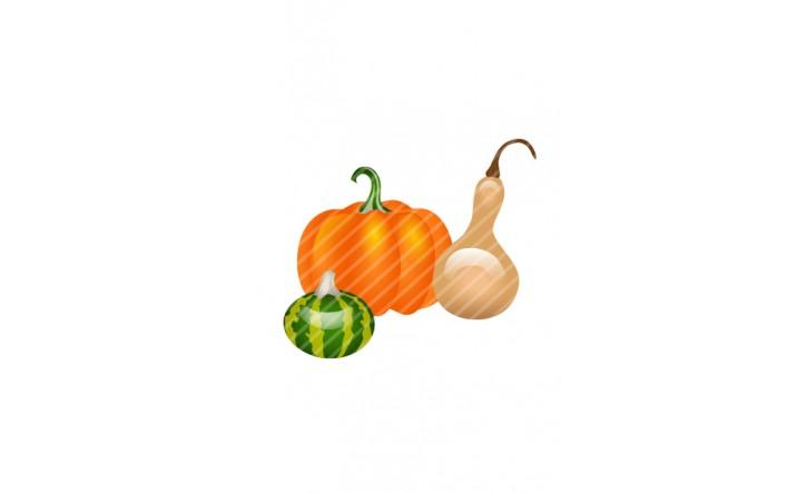 Pumpkins-vector-image