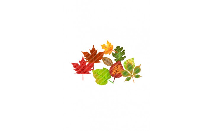 Autumn-leaves-vector-image